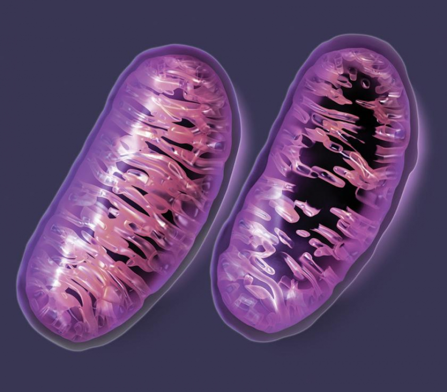 Genetic counseling for mitochondrial disorders